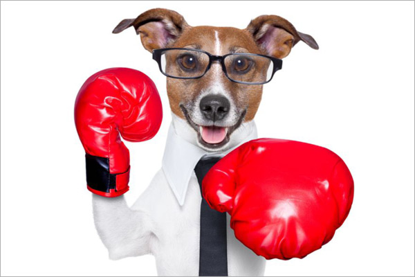 Dog with boxing gloves
